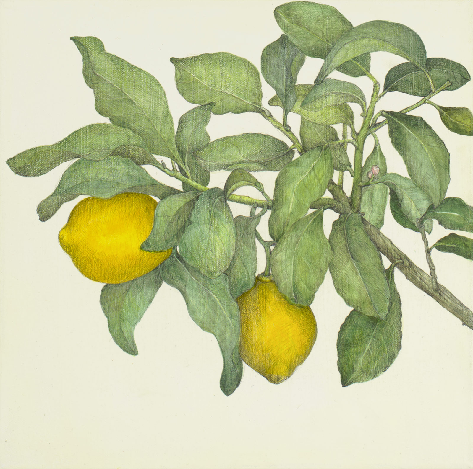 Lemon cadmium + Two lemons